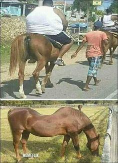 Pobre caballo