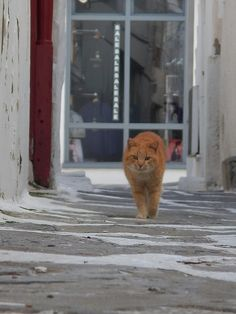 Kitty in the backstreet of Naousa-Paros