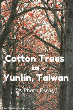 Orange Flowers Everywhere: Cotton Trees in Yunlin, Taiwan [A Photo Essay]