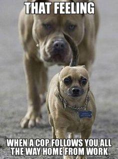 45 Funny Dog Memes – Dogtime