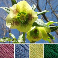 'Hellebore/Early Spring Flower' color palette featuring Shetland yarn in Aster, Cornflower, Lime and Spruce. To remind us it really is spring... despite the incoming April Fools' Day Snowstorm.