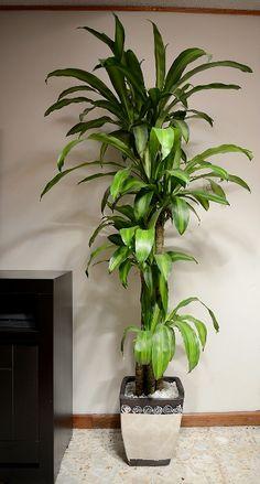 1000 images about naturaleza decorativa on pinterest for Macetas para interiores hogar