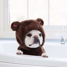 What a precious little.... bear? French Bulldog? Who knows.   www.bullymake.com