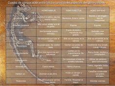 Compración entre las principales especies del género Homo.