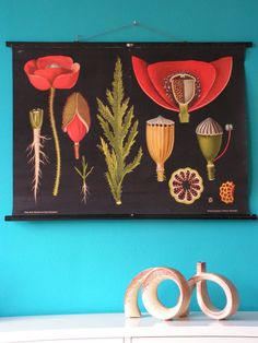 Vintage German Pull Down School Chart, Poster Botanical Floral Print, Flower the Poppy, Jung Koch Quentell. €155,00, via Etsy.