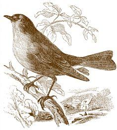 Free Stock Bird Images Brown