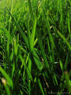 """Iarba"" - The Green Grass of Home :) Green Grass, The Borrowers, Herbs, Urban, Face, Herb, The Face, Faces, Facial"