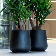Balcony Plants, Potted Plants, Indoor Plants, Interior Garden, Interior Plants, Big Planters, Planter Pots, Buddha Garden, Decoration Plante