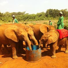 Elephant Orphanage, Nairobi, Kenya. The David Sheldrick Wildlife Organization is an amazing place. My adopted daughter, Mashariki, lives there :) The volunteers and workers at this place give up a lot so that these orphans have a chance at a life.