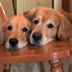 These dogs want you to believe they never get any cookies ;-)