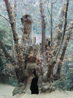 Castanyer de Can Cuc - Què fem? Spain, Lion Sculpture, Canning, Nature, Prints, Elopements, Paths, Parks, Tourism