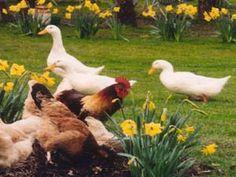 Lavandula Farm - Daylesford Daylesford, Lavandula, Farm Animals, Countryside, Barn, Seasons, Lifestyle, Nature, Decor