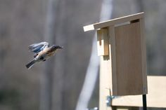 5 tips for nesting box success