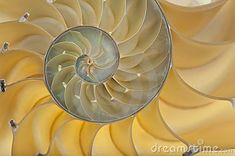 Download Nautilus Shell Stock Images for free or as low as $0.20USD. New users enjoy 60% OFF. 22,980,393 high-resolution stock photos and vector illustrations. Image: 18663004
