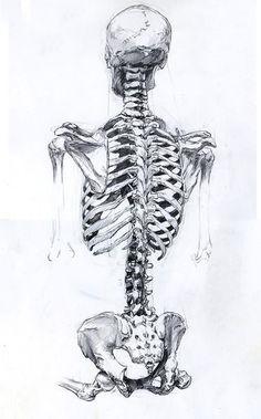 Рисуем фигуру человека - торс