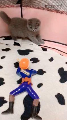 Funny Animal Memes, Funny Animal Videos, Cute Funny Animals, Funny Animal Pictures, Cute Baby Animals, Funny Cute, Animals And Pets, Cute Cats And Dogs, I Love Cats