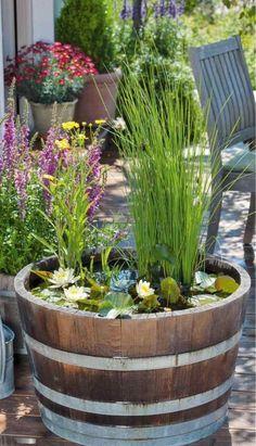 Wasserlilien und Wasserminze im Fass aus Holz
