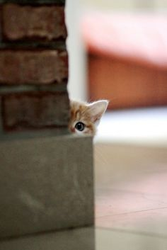 Je te vois petit chat...  Plus de découvertes sur Le Blog des Tendances.fr #tendance #cute #animaux #blogueur
