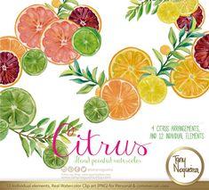 Un favorito personal de mi tienda de Etsy https://www.etsy.com/mx/listing/269934699/citrus-acuarela-limas-limones-naranjas