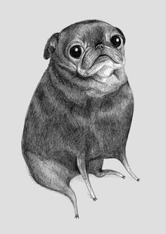 Sweet Black Pug by Sophie Corrigan Illustration