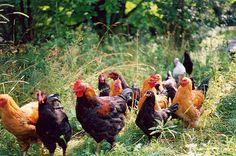 Directory Of Minnesota Organic Farms The Minnesota