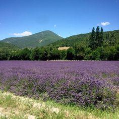 Lavender field near Montélimar, south of France 🌞