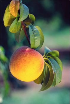 id pick a georgia peach  #ridecolorfully  #bucketlist