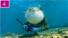 Funny pictures about Puffer Fish Photobomb. Oh, and cool pics about Puffer Fish Photobomb. Also, Puffer Fish Photobomb photos. Yandere, Photos Du, Funny Photos, Awkward Pictures, Random Pictures, Most Famous Memes, Funny Cats, Funny Animals, Save Animals