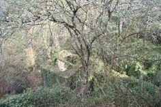 pH02, Valle del Navia, 2007 / grupo aranea