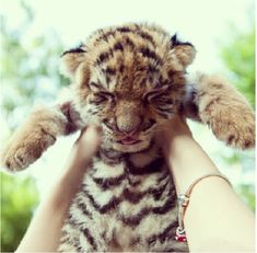 Tiger baby...I do this to my baby and she makes the same face... oof