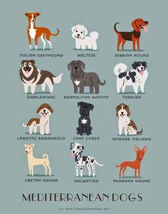 Guía canina ilustrada | No me toques las Helvéticas | Blog sobre diseño gráfico y publicidad