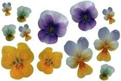 12 Floral Violet and Yellow Patches Iron On TUFTED by zafran, 21.00