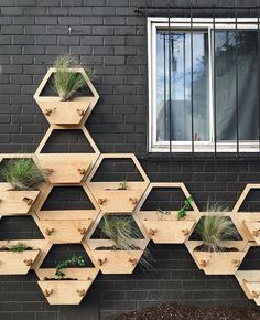 Need some inspiration for your or How about making honeycomb planters that scale your wall? 🐝 \\\ Photo by Diy Wood Projects, Garden Projects, Plant Box, Plant Stands, Wood Planters, Succulent Planters, Succulents Garden, Hanging Planters, Cactus Plants