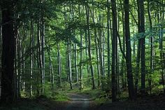 Western European broadleaf forests - Wikipedia, the free encyclopedia