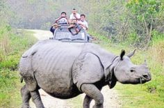 Guwahati: Four poachers were on Sunday arrested near the Kaziranga National Park in Assam. The arrests were made by the forest department and the Special Task Force (STF) set up to check wildlife crimes in the state. An official said the poachers, Miraj Ali, Bhaiti Ingty, Gyas Uddin and Abu Siddeque, were involved in a case of poaching of an...  Read More