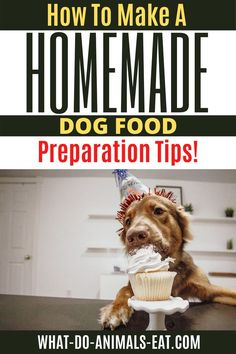 In this post, you'll learn how to make delicious and healthy homemade dog food for your dog! Find out the perfect preparation tips! #Homemadedogfood #dogtreats #doghealth #dogtips