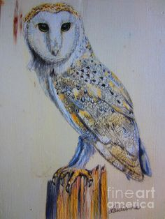 my new colored pencil of a barn owl for sale, this is a 5x7 on wood panel.  Prints are available as well.  http://fineartamerica.com/featured/barn-owl-laurianna-taylor.html