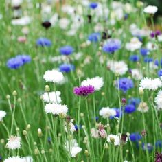 15-flower-seeds-to-plant-this-spring