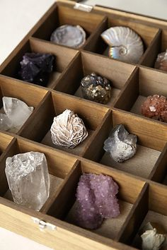 Curio Collector's Box with minerals and fossils. Minerals And Gemstones, Rocks And Minerals, Rock Collection, Crystal Collection Display, Collection Displays, Shell Collection, Crystal Magic, Crystal Box, Sticks And Stones