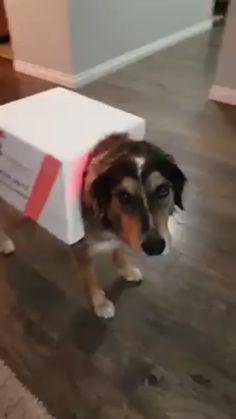 Funny Dog Videos, Funny Animal Memes, Dog Memes, Funny Animal Pictures, Cute Funny Dogs, Cute Funny Animals, Cute Baby Animals, Animals And Pets, Cute Puppies