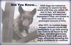 Did you know search and rescue (SAR) dogs can suffer depression...