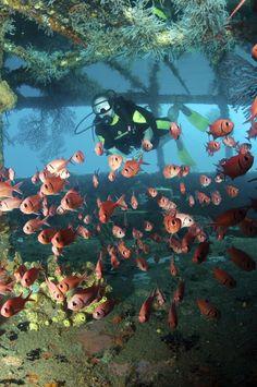 [✔]Scuba Diving - Done