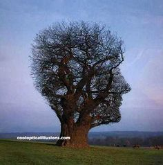 Face in aTree Illusion - Bing Images