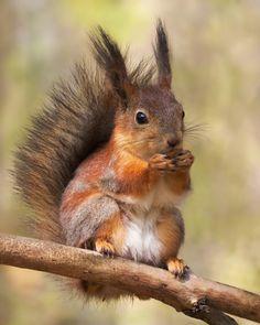 Squirrel. Magical Nature Tour