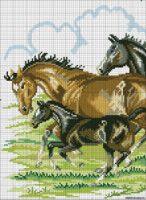 Gallery.ru / Фото #40 - лошади - zhivushaya