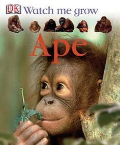 We start life as baby apes, but how do we turn into the gorillas, orangutans, chimpanzees, and gibbons that live in the jungle? Turn the pages and watch us grow!