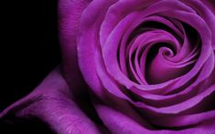 free flower pictures | This is the Rose flower background image. You can use PowerPoint ...