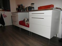 38 new Ideas for diy dog crate furniture ikea hacks Kallax, Ikea Trones, Ikea Hacks, Hacks Diy, Ikea Dog, Bed Ikea, Ikea Cupboards, Base Cabinets, Dog Crate Furniture
