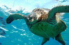 Sea Turtles are so peaceful