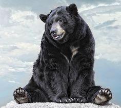 Lions & Tigers & Bears....Oh My!! by Ann J. Sagel, via 500px